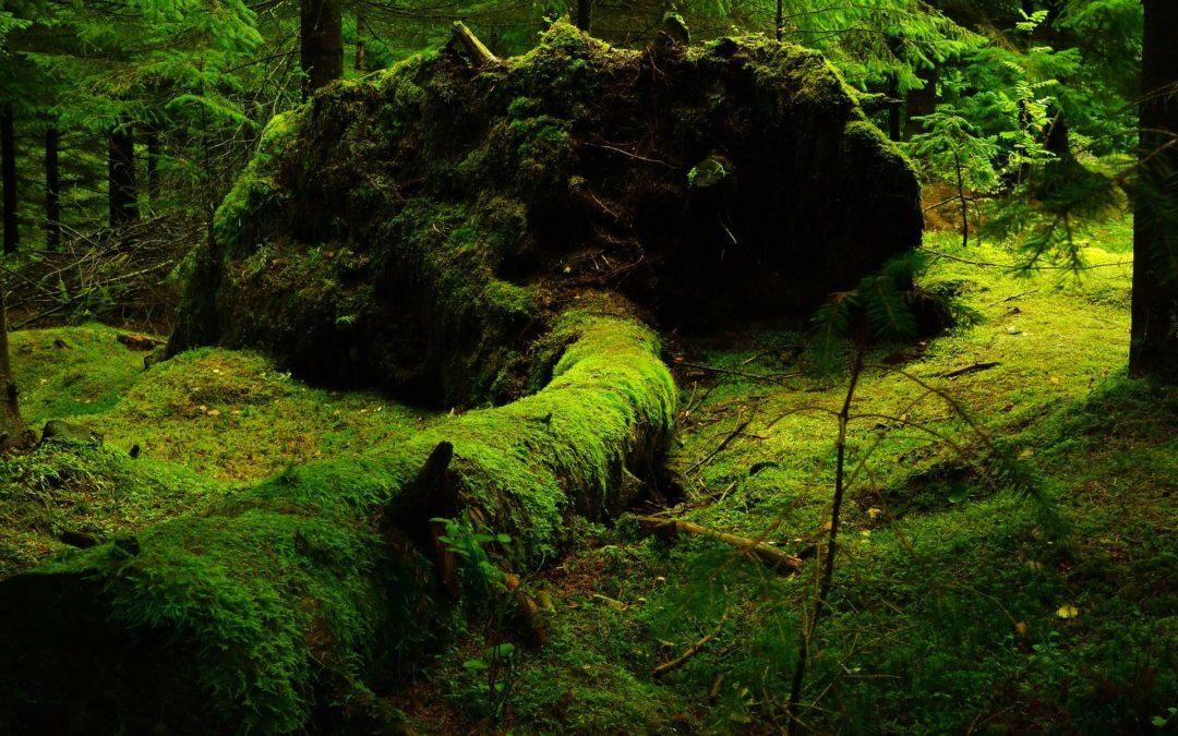Wälder statt Windräder