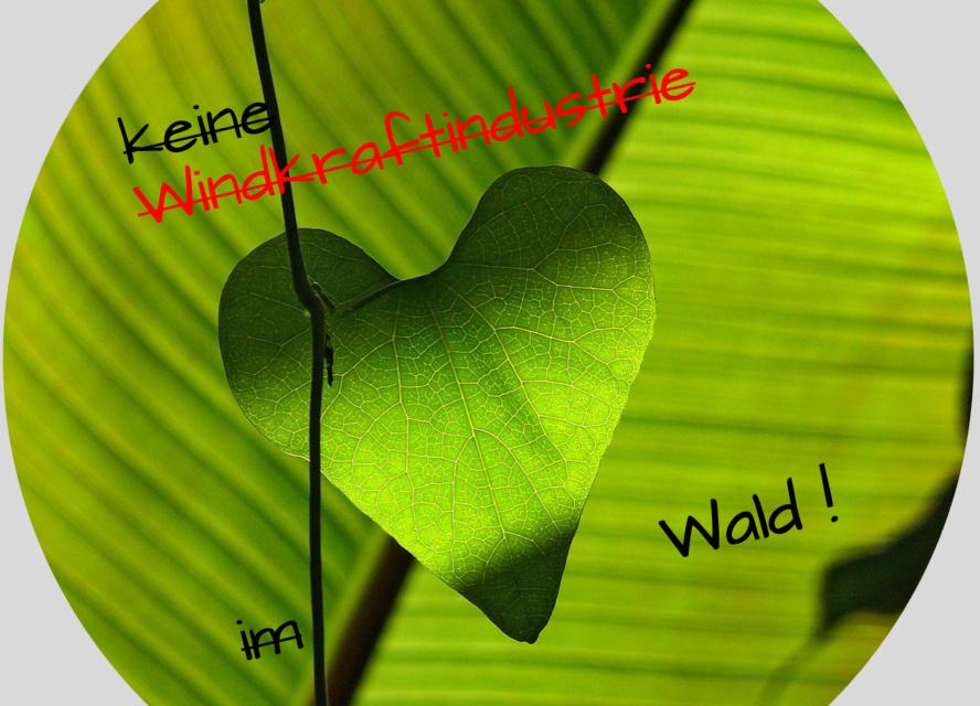 Grünes Herz schlägt höher – Wälder brauchen Thüringer